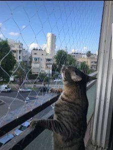 רשת למניעת נפילת חתולים