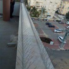 הרחקת יונים מגגות